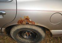 Способы защиты автомобиля от коррозии.